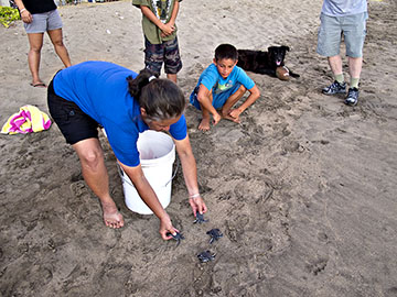 Glynnis Nakai, US F&WS, releases rescued hatchlings