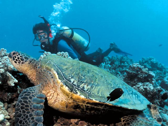 "Osha Gray Davidson dives at the Turtle House. Here he meets a young male honu, Nui (""Nui"" is Hawaiian for ""big, large"")"