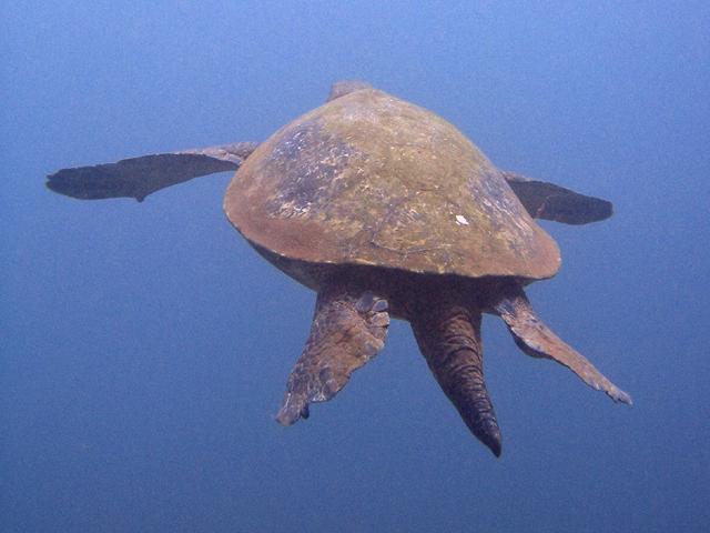 Honokowai Sea Turtles Summer Of 2006 Week 2