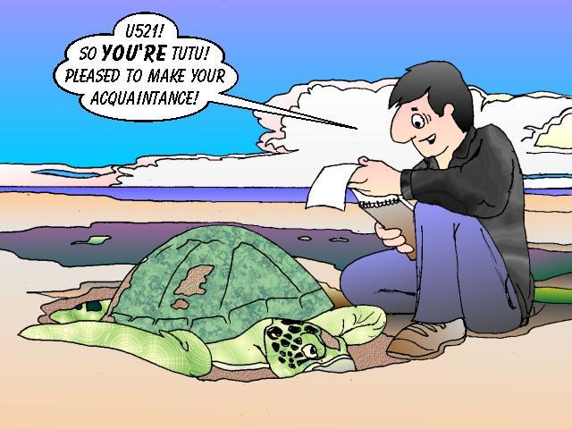 Cute Sea Turtle Drawing