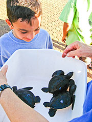 Young honu admirer admires young honu